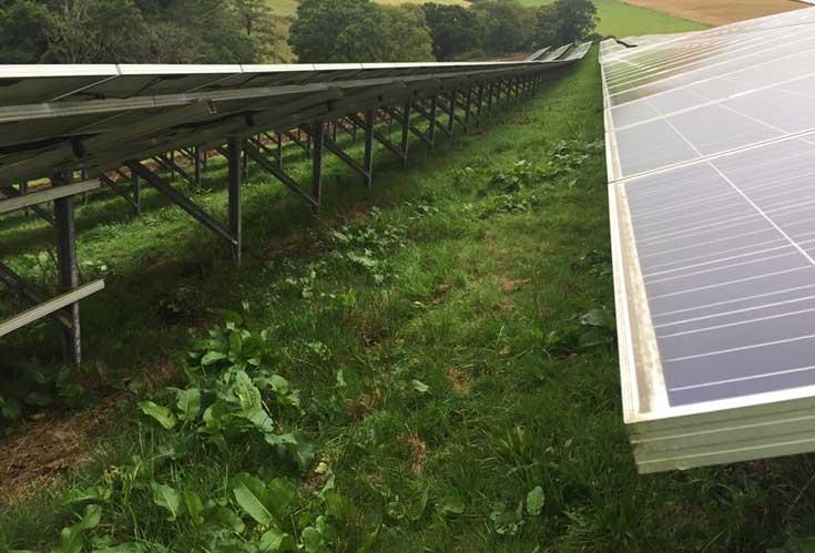 solar farm ground maintenance service